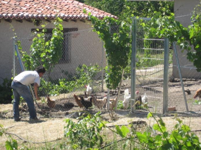 Fruta y verdura ecológica Valladolid