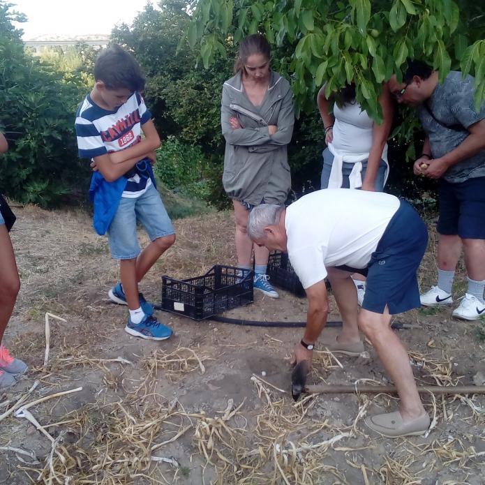 Talleres y cursos de huerto ecológico - Casa Rural Beautiful Alamedas, Valladolid